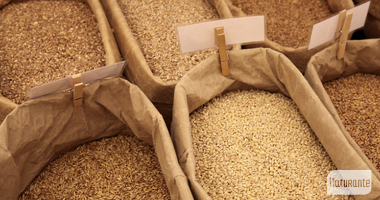 El gluten se presenta en cereales como el trigo, la cebada, el centeno y la avena.