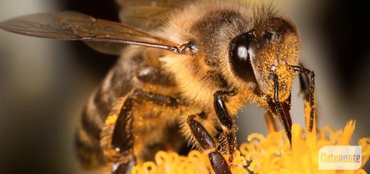 abejas 2